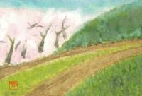 桜を望む畦道