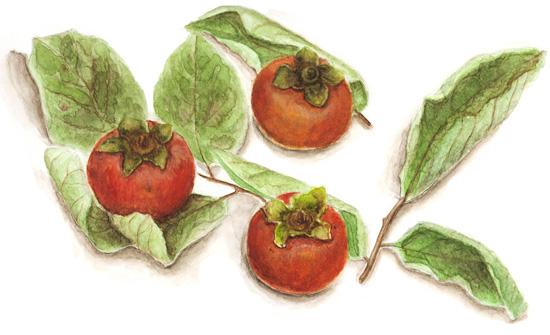 果物、水彩画